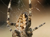 Spider in garden