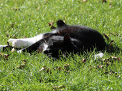 PETS - SOX LAPPING UP THE SUN
