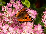 Butterfly on garden flower