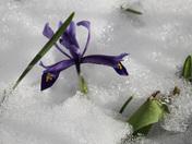 Glimmer of Spring