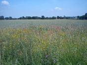 Wildflowers in Newbourne