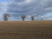 Suffolk Fields :)