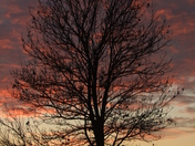 Fire Tree :)