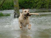 Hugo in the Floods