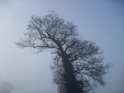 Foggy Morning Silhouette.