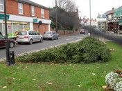 ACLE XMAS TREE CASUALTY FROM HIGH WINDS.