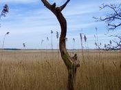 View across marshland in Blytheburgh. 01/05/16  10.37am