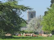 Pastoral English View