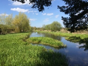 Peaceful Wensum