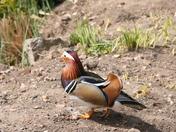 Pensthorpe Birds