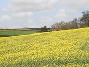 Walsingham Walk