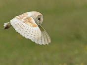 A Barn Owls World ( Part Two)