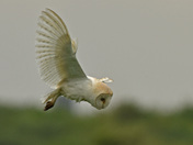 A Barn Owls World (  Part one )