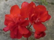 flowers photo challenge