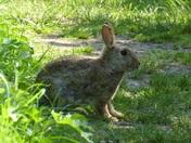 Rabbit surprise