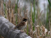 Mr and Mrs Reed Bunting