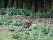 Rabbits everywhere
