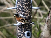Some birds from Sculthorpe Moor.
