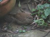 Little visitor