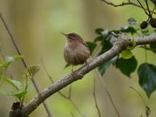 Birds at Strumpshaw Fen