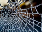 Cogwebs