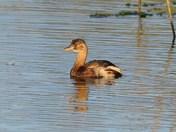 birdlife around cley reserve.