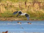 birds from around cley reserve.