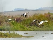 more wildlife from cley reserve.