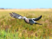 more birds in flight cley reserve.