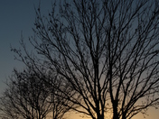Silhouette of a naked tree