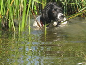 Ruby cooling off above Ludham Bridge.