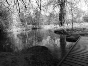 The Little Ouse, Thetford (Part 1)