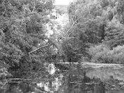 Fakenham Mill Reflections
