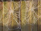 Stringy Texture