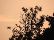 Sunset Over Weasenham Woods