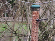 Titchwell Marsh Feeders