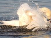 Splish! Splash! I was taking a bath!