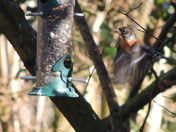 Feeding stations at Sculthorpe Moor