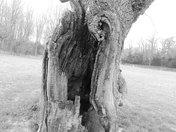 Sinister Hollow Dead Tree