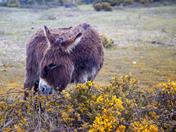 Donkey Lunchtime
