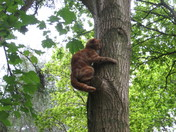 Tree Puss