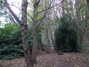 An afternoon in Thorpe Woods - ( series 1)