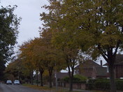 Images of Trees in Autumn Colours.