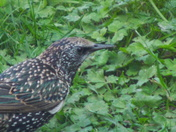 Members of The Starling Family (2)