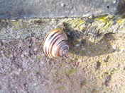 Snails on a wall