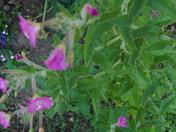 Weed in garden border