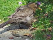 FORAGING BIRD