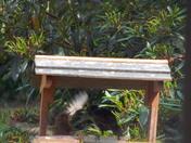 Feeding time on the bird table