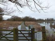 flooding at hempton marsh