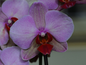 Orchid Flower, Depth of Field Project